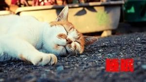 眠れない人へ おすすめの睡眠改善薬